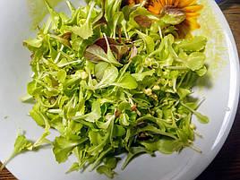 Салат-микрозелень на Green Kit 8