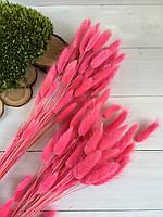 Лагурус сухоцвет ярко  розовый 50 шт