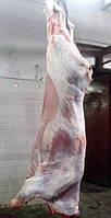 Мясо телятина Свежая охлажденная туша на кости Халяль от производителя