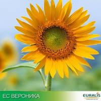 Семена подсолнечника ЕС Вероника