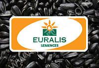 Семена подсолненика ЕС Террамис под Евролайтинг