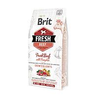 """Сухой корм Brit Fresh Beef with Pumpkin Puppy Large Bones & Joints """"Говядина с тыквой"""" 27/15 (для щенков крупных пород), 12кг"""