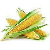 кукуруза джекпот