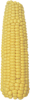 Семена кукурузы РАМ 1033