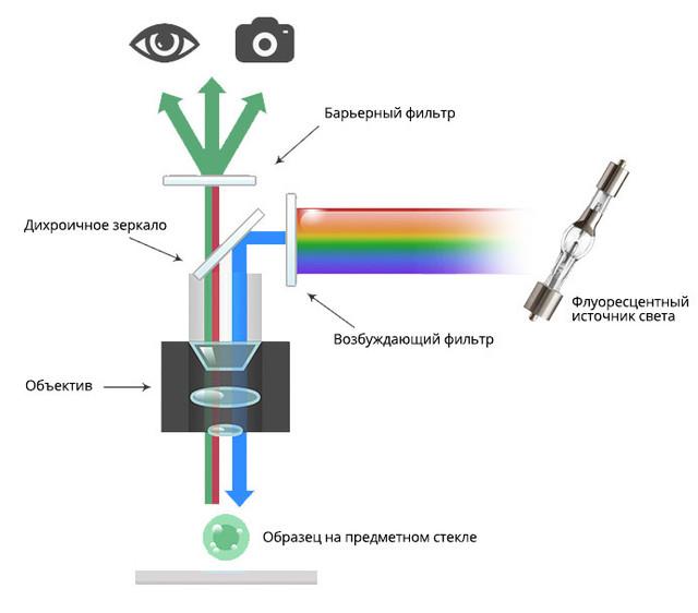 Микроскоп MICROmed Evolution LUM LS-8530