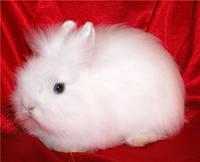 Карликовые кролики. 10 симпатичных пород