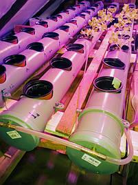 Гидропоника на чердаке на удобрениях Green Kit 1