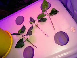 Гидропоника на чердаке на удобрениях Green Kit 2