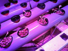 Гидропоника на чердаке на удобрениях Green Kit 3