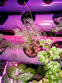 Гидропоника на чердаке на удобрениях Green Kit 11