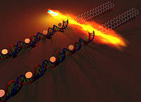Графен + ДНК = Будущее микроэлектроники