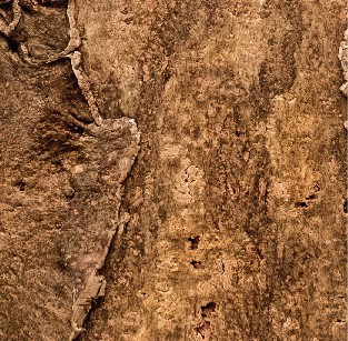 Настенная панель из коры пробкового дуба  CORKART - PO3180S