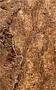 Настенная панель из коры пробкового дуба  CORKART - PO3180S, фото 2