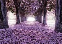 Глянцевые фотообои цветущие деревья разные текстуры , индивидуальный размер