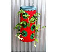Приспособление для выращивания клубники Planter