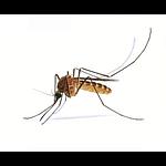 Комары и клещи