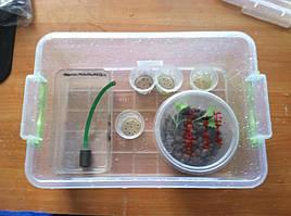 Салат одесский кучерявец, выращивание в DWC системе гидропоники в подвале 8
