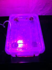 Салат одесский кучерявец, выращивание в DWC системе гидропоники в подвале 10