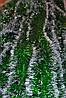 Мишура зеленая (белый кончик) , длина 1.5м, диаметр 70мм Харьков.