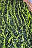 Мишура темно-зеленая (салатный кончик) , длина 1.5м, диаметр 70мм Харьков.