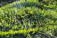 Мишура темно-зеленая (салатный кончик), длина 1.5м, диаметр 50мм Харьков., фото 1