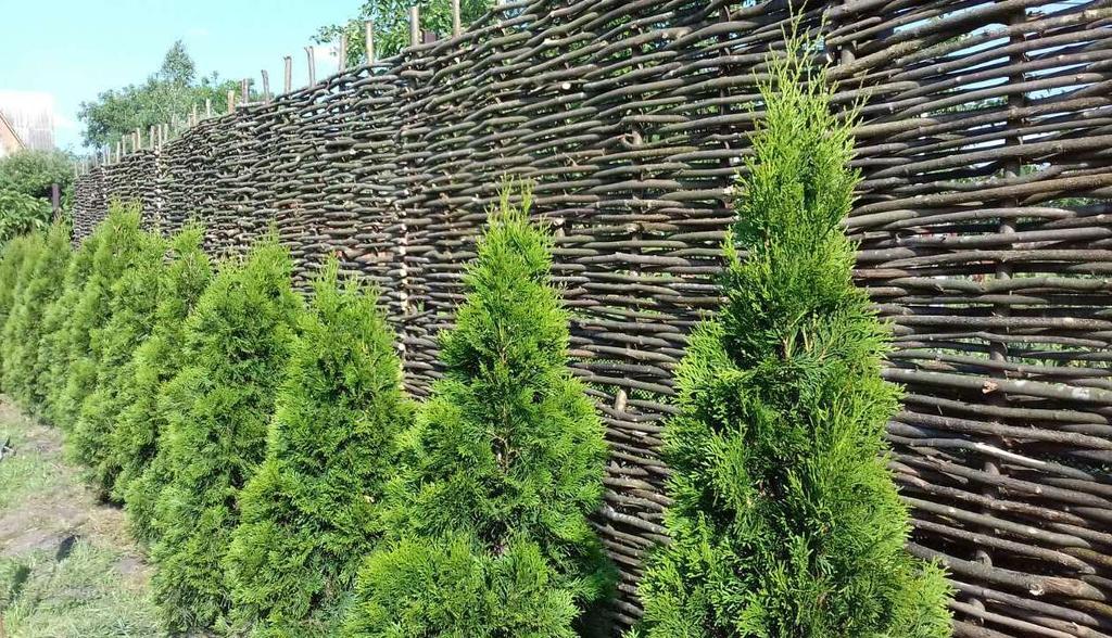 Декоративный забор тын на садовом участке и красиво и практично