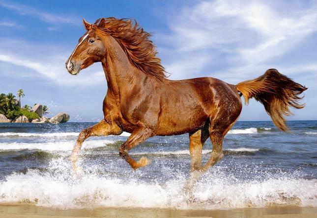 Пазлы Лошадь в галопе, 500 эл.