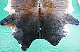 Велика шкіра корови темно коричнева з білими плямами триколор, фото 2