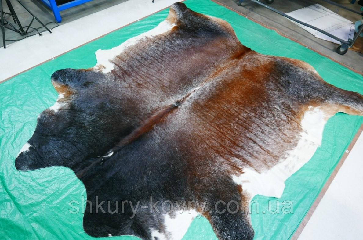 Велика шкіра корови темно коричнева з білими плямами триколор
