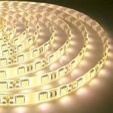 Светодиодная лента B-LED 5050-60 WW IP65 теплый белый, герметичная, 1м, фото 2