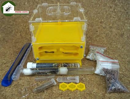 """Повний комплект : мурашина ферма """"КУБ"""" + мурахи messor structor (жнець), корм та аксесуари"""