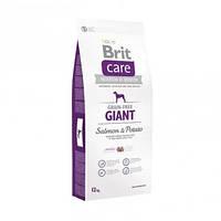 Сухой беззерновой корм Brit Care Adult G для собак гигантских пород, с лососем 12КГ