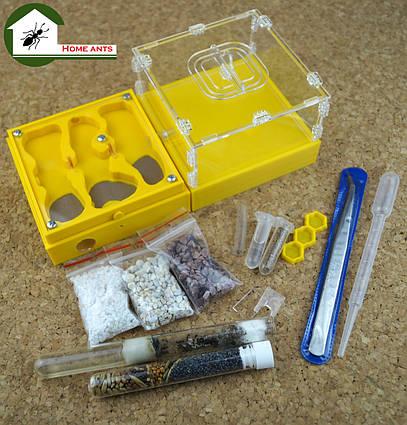 """Полный комплект: муравьиная ферма """"Лего Старт"""" + муравьи messor structor (жнец) , корм и аксессуары."""