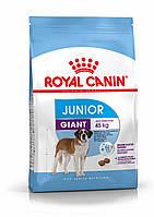 Корм для щенков гигантских пород от 8 до 24 месяцев- Royal Canin GIANT JUNIOR, 15 кг