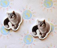 Кошка. Магнит обучающий