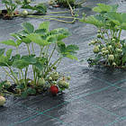 Агроткань 1,6*100м 100 гр/м² против сорняков PP, Зеленая UV, Bradas, фото 7