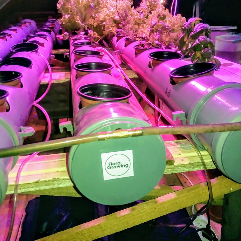 Гидропоника на чердаке на удобрениях Green Kit
