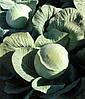 Семена капусты Колобок 2.500 семян