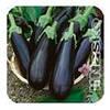 Семена баклажана Магнури 500 семян