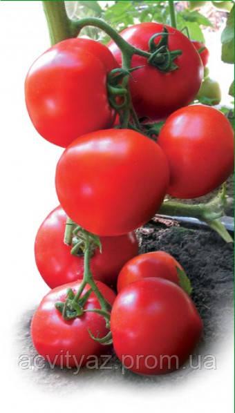 Семена томата Ядвига 100 семян
