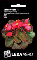 "Семена Бегонии Ореб F1, 10 сем., темно-розовой, вечноцветущей бронзоволистой, ТМ ""Леда Агро"""