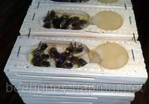 Россиянка пыталась тайно вывезти  с Украины 1265 пчеломаток породы карпатка.