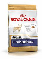 Сухий корм для цуценят породи чихуахуа Royal Canin Chihuahua Junior