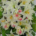 Ладья роза с лилией  с росой 130 см 4 расцветоки, фото 3