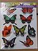 Декоративная наклейка ZV  № 8 Бабочки