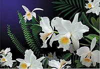 Фотообои на бумажной основе Арт-Декор Дикая орхидея 194х268 см 2000000450773
