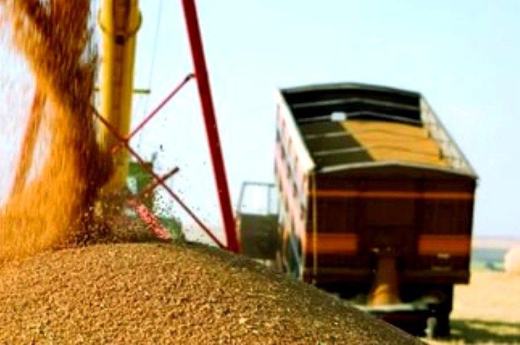Грузоперевозка пшеницы