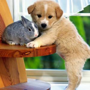 домашние животные и зоотовары, общее