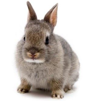Кормушки для кроликів
