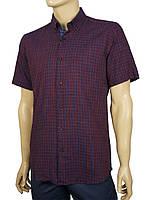 Мужская летняя рубашка Negredo 9046#79 slim bordo бордового цвета